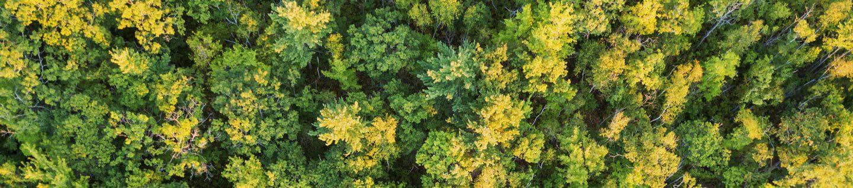 Treetops i Stock 1172772076 crop